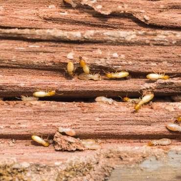 2. Traitement des bois
